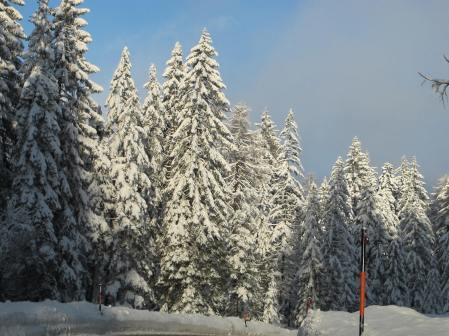Sunny & Snowy